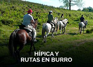 botones-actividades-hipica-burro