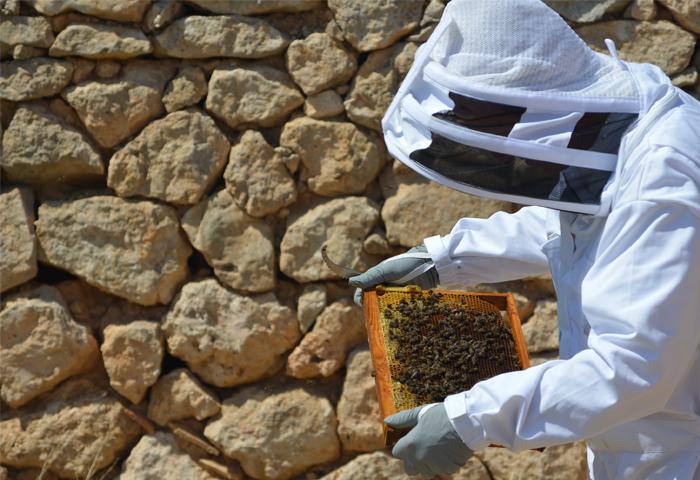 apicultura en braojos