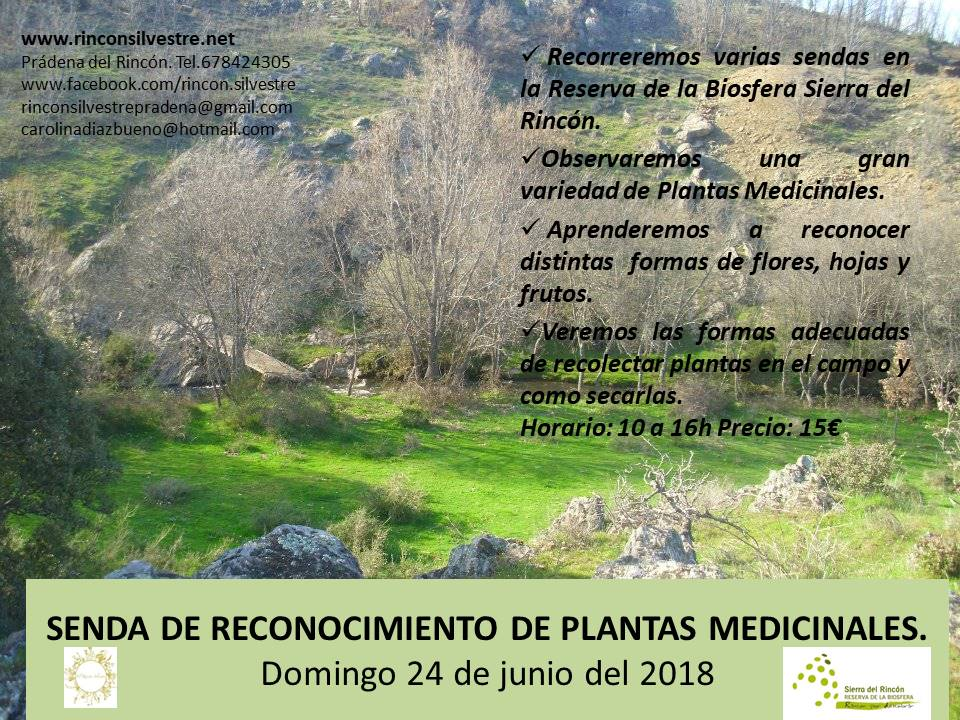 medicinales 24 junio