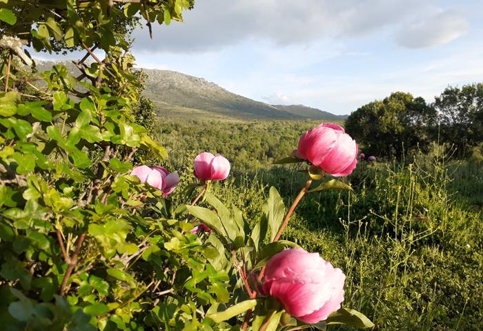 Reserva de la Biosfera Sierra del Rincón-merinas