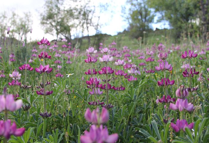flowers of the sierra norte de madrid