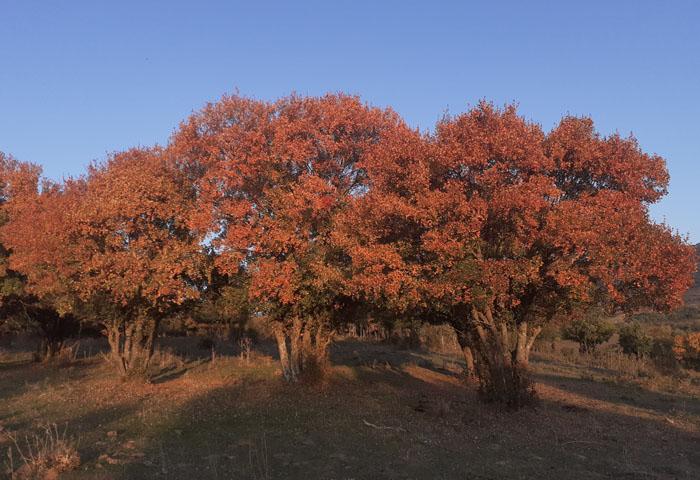 rutas de otoño