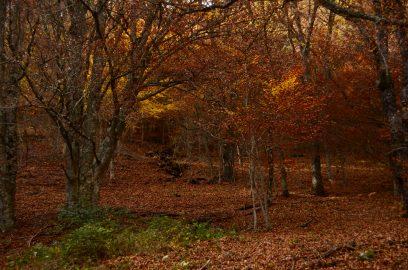Hayedo de Montejo, Patrimonio natural de la Humanidad