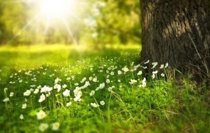 Secretos de primavera en la Sierra Norte de Madrid